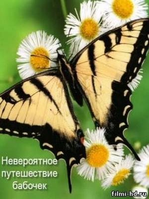 Невероятное путешествие бабочек ( 2008 ) Смотреть онлайн бесплатно