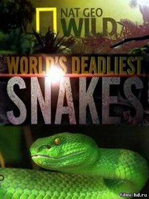 Самые опасные змеи в мире 2010 Смотреть онлайн бесплатно
