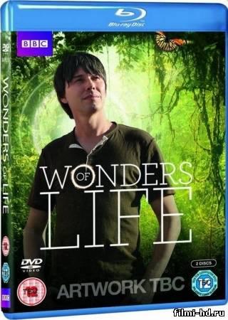 Чудеса жизни / Wonders of Life (2013) Смотреть онлайн бесплатно
