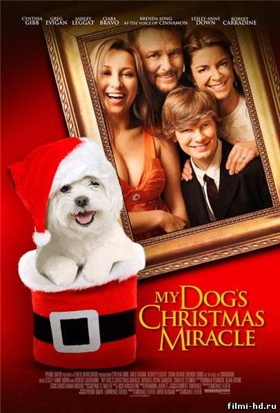 Чудо-пёс (2011) Смотреть онлайн бесплатно