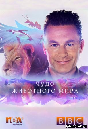 Чудо животного мира (2014) смотреть онлайн